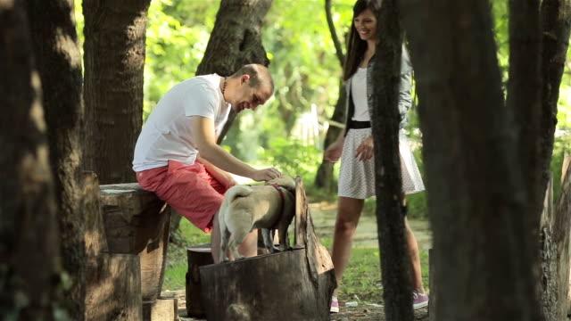 プライベートな瞬間の共有にパグの公園で犬 - 愛玩犬点の映像素材/bロール