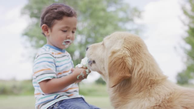 Sharing Ice Cream with a Dog A young toddle shares his ice cream cone with a golden retriever dog ice cream stock videos & royalty-free footage