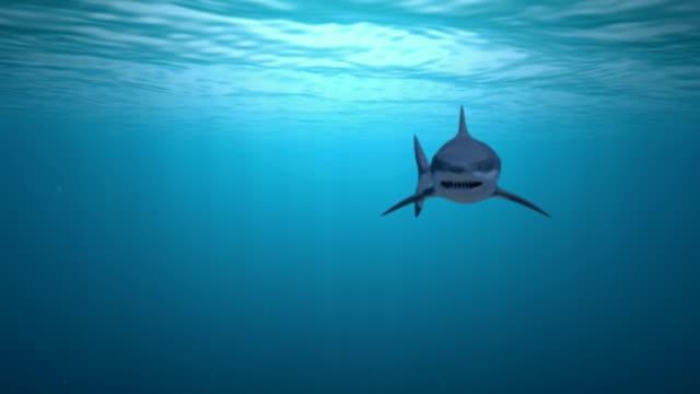 Shark Attack video