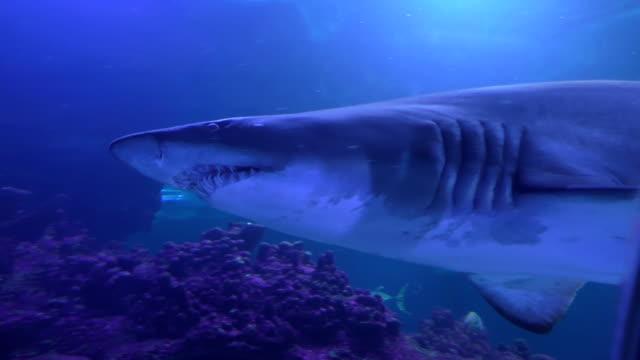 Shark behind glass video