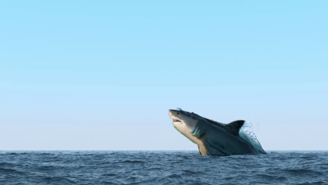 shark jump out of water - saltare video stock e b–roll