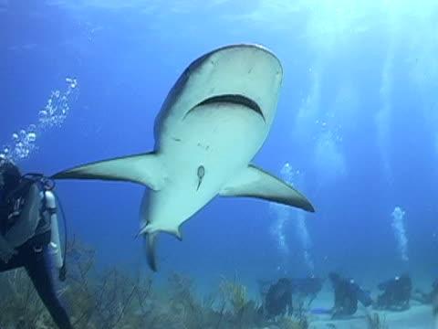 Shark overhead and into the sun video