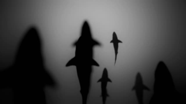 4K Shark Silhouettes Passing Overhead. video