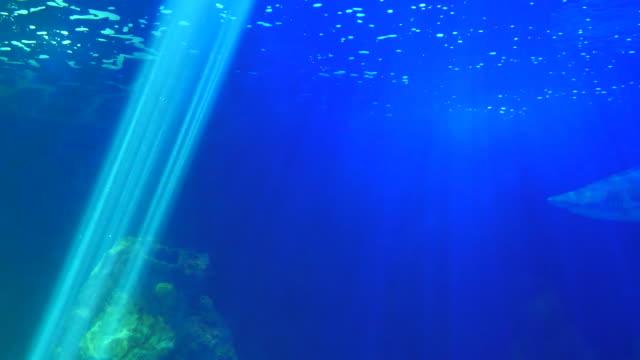 Bидео Shark swimming in blue sea background