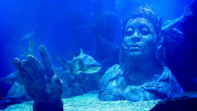 Shark Swims Near Submerged Ancient Statue video