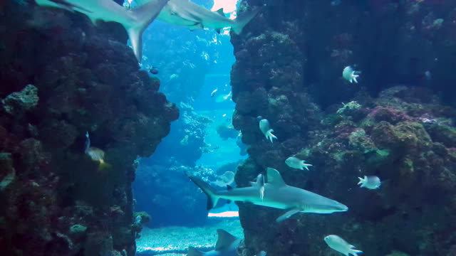 sharks in aquarium - океанариум стоковые видео и кадры b-roll