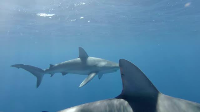 haien schwimmen in vor einem käfig mit touristen - käfig stock-videos und b-roll-filmmaterial