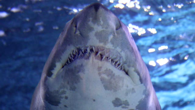 sharks swimming under water - denti video stock e b–roll
