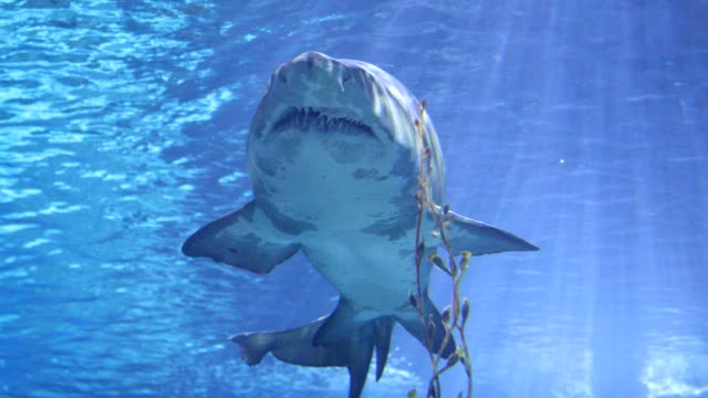 sharks swimming under water sharks swimming under water aqualung diving equipment stock videos & royalty-free footage