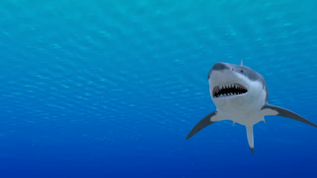 Sharks video