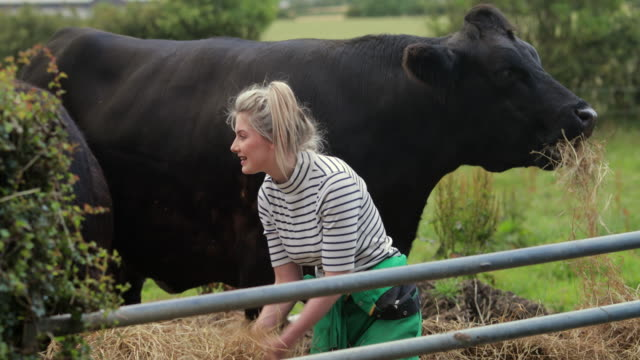she loves working with the cattle - animale femmina video stock e b–roll