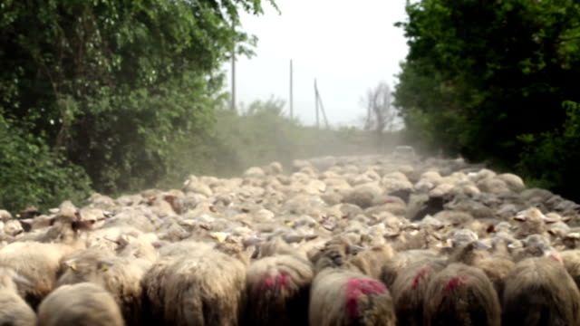 sheep crowd - sheep stock videos and b-roll footage