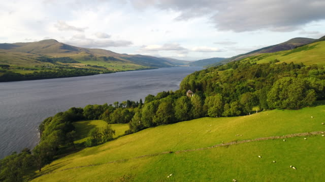 Sheep Farming On A Lochside Hill Pasture video