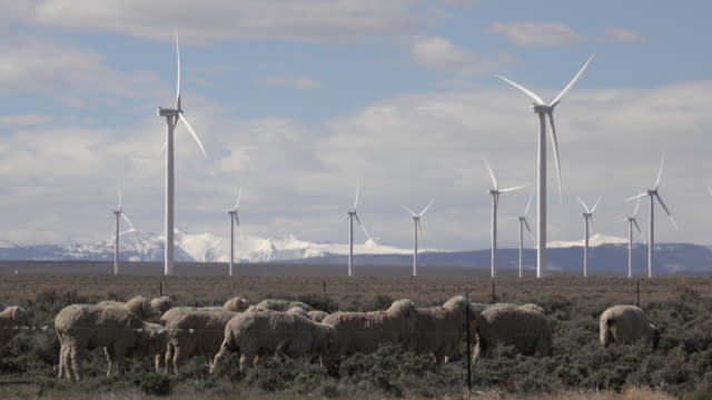 Sheep graze Fort Bridger Wyoming Mountain Wind Farm turbines snowy peaks video