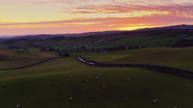 アット サンセット - 空撮ヨークシャー農地で放牧羊 - 石垣点の映像素材/bロール