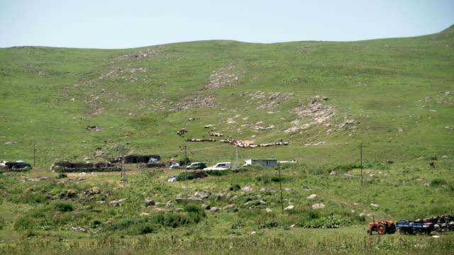 sheep herd - mandriano video stock e b–roll