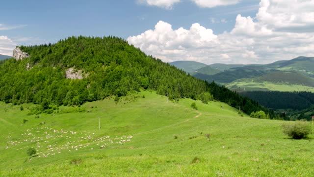 schafe bewegen sich schnell und füttern grüne weide in karpaten berge wiese in sonnigen sommer natur zeit verfallen - slowakei stock-videos und b-roll-filmmaterial