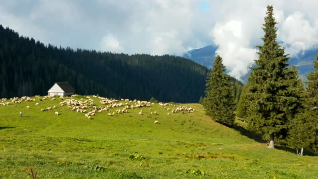 Sheep On The Mountain Valley