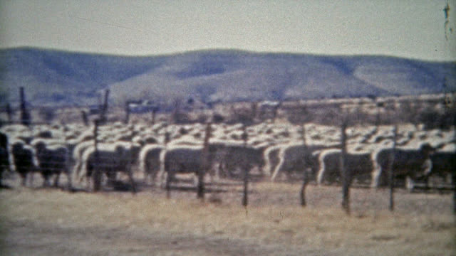 ROSWELL, NEW MEXICO 1953: Sheep ranchers American western cowboys dry climate. . rancher stock videos & royalty-free footage