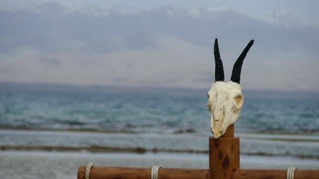 stockvideo's en b-roll-footage met schapen schedel - dierlijk bot