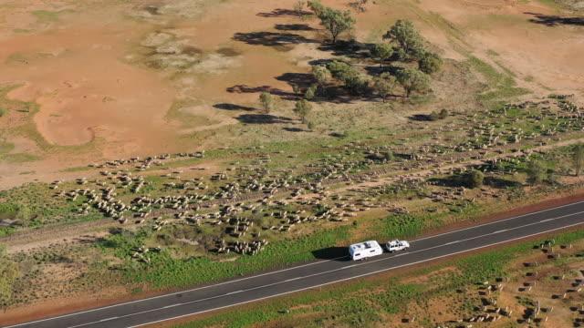 stockvideo's en b-roll-footage met schapen - caravan