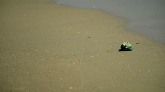 vídeos de stock e filmes b-roll de concha na praia - bugio