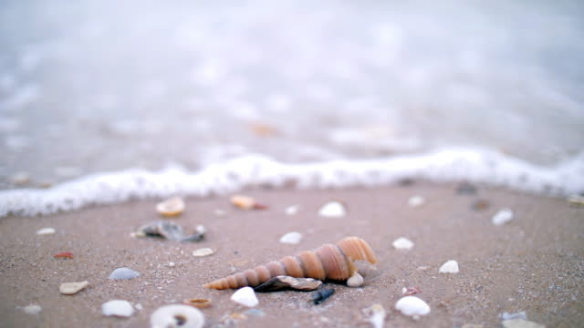 Shell on the sand beach with sea wave