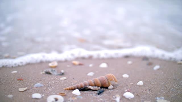 vidéos et rushes de coquille sur la plage de sable avec la vague de mer - coquille et coquillage