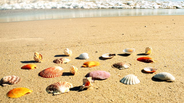 vidéos et rushes de coquillages sur la plage. - bivalve