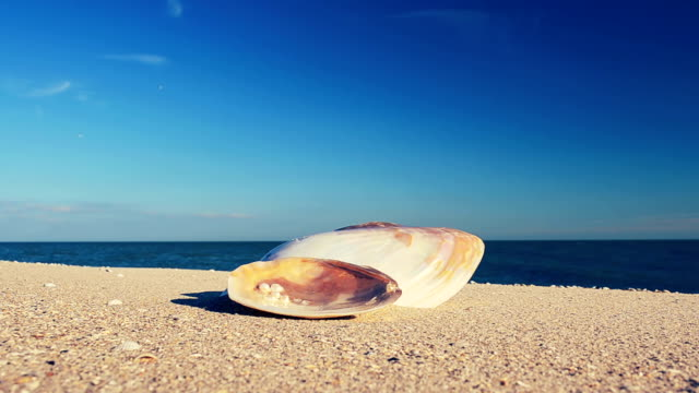 Shells on the beach. video