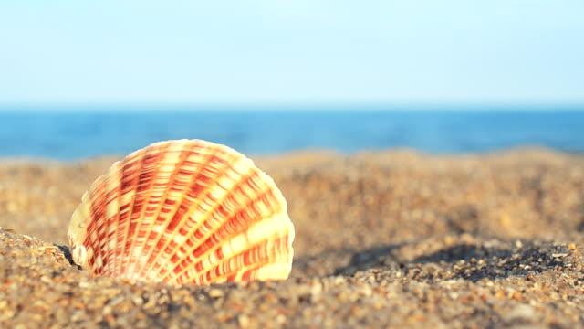 vidéos et rushes de coquillages sur la plage. - coquillage