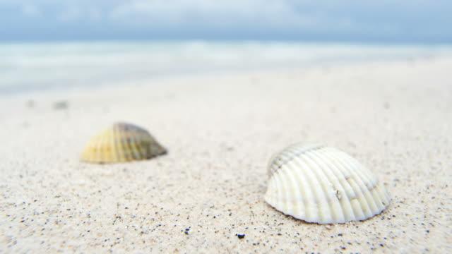 vídeos de stock e filmes b-roll de shells on white beach sand by the sea - bugio