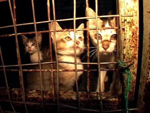 shelter kittens - kısırlaştırma stok videoları ve detay görüntü çekimi