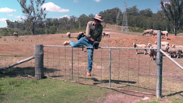 stockvideo's en b-roll-footage met herder klimmen over een hek - fence