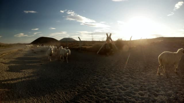 shepherd sitting near the fence in sunlight and chases sheep running from left to right - mandriano video stock e b–roll