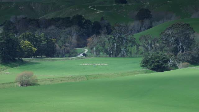 Shepherding in Rural NZ Landscape video