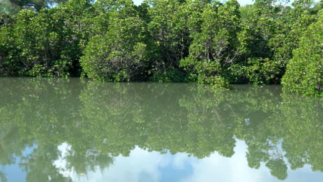 Shimajiri Mangrove forest or park at high tide in Miyako island video