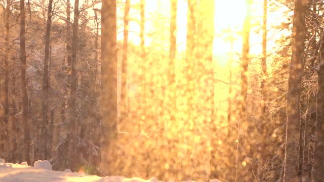スローモーションのきらめく雪山の森林の冷ややかな樹木に夕暮れ時 ビデオ