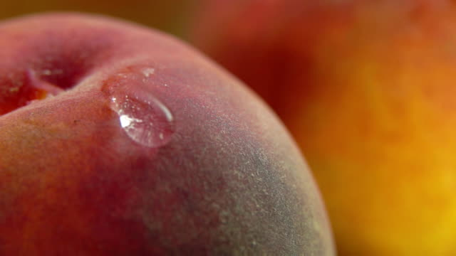 shining drop of water flows down the peach - pesca frutta video stock e b–roll