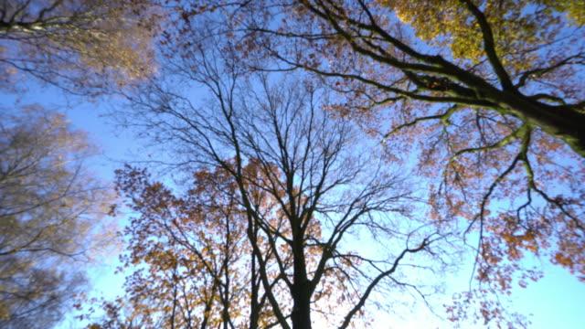 Shining Trees in Daylight video