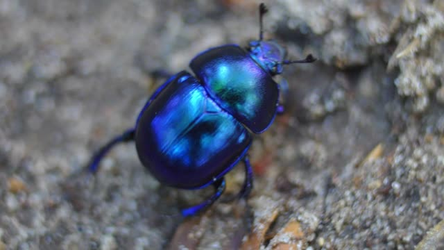 shiny colorful forest beetle bug walking on sand in woods close up - жук стоковые видео и кадры b-roll