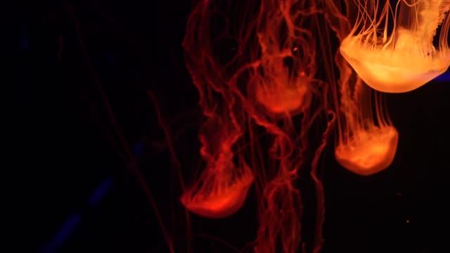 Shiny vibrant fluorescent jellyfish glow underwater, dark neon dynamic pulsating ultraviolet blurred background. Fantasy hypnotic mystic pcychedelic dance. Vivid phosphorescent cosmic medusa dancing