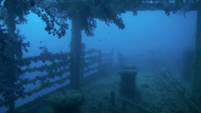 shipwreck underwater in red sea egypt. - кораблекрушение стоковые видео и кадры b-roll