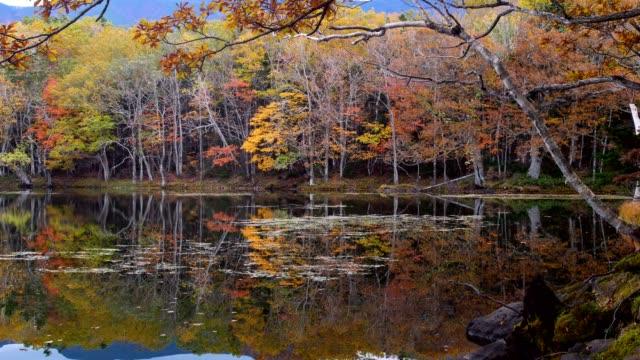 shiretoko goko sjöar (shiretoko national park) - hokkaido bildbanksvideor och videomaterial från bakom kulisserna
