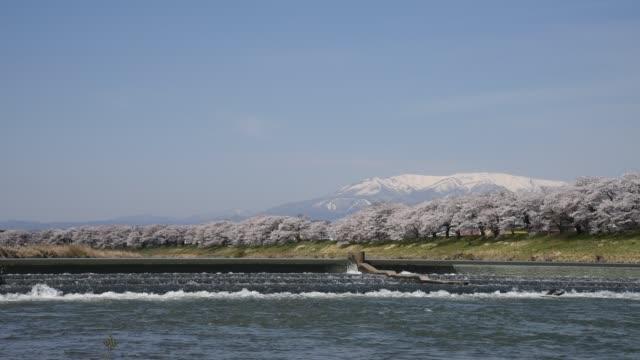 白石堤一目千本 (1,000 一目で桜の木) - 土手点の映像素材/bロール