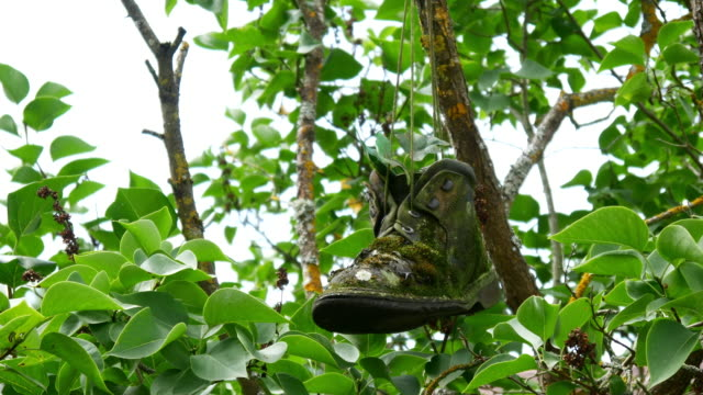 Shoes with plant inside hanging on tree video