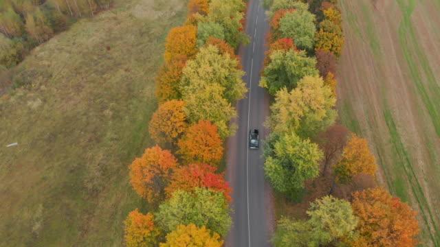 공중에서 촬영. 나무 들 사이로 따라 타고 레트로 자동차 - mountain top 스톡 비디오 및 b-롤 화면