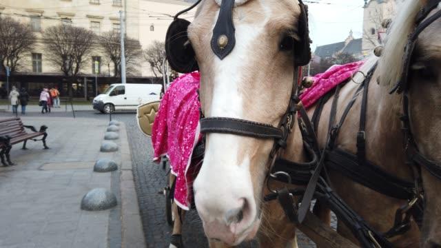 vidéos et rushes de tir de chevaux. plan rapproché. chevaux sur la rue de ville. - apprivoisé