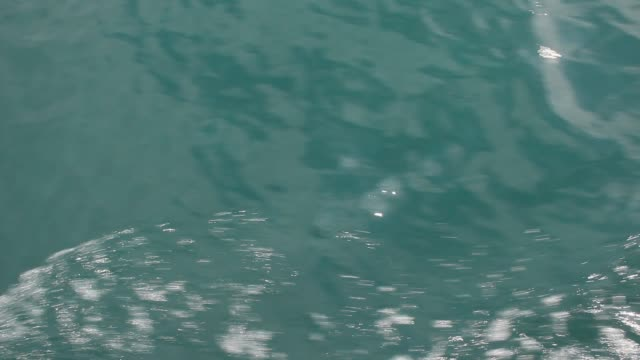 Shooting the surface of the water from a moving boat. video