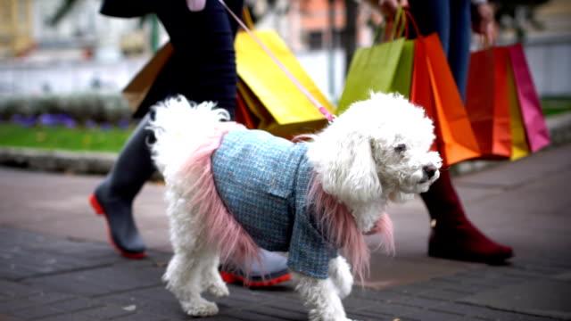 shopping med din hund - cold street bildbanksvideor och videomaterial från bakom kulisserna